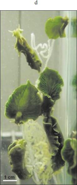 Talk:Biokhimiya - Wikipedia